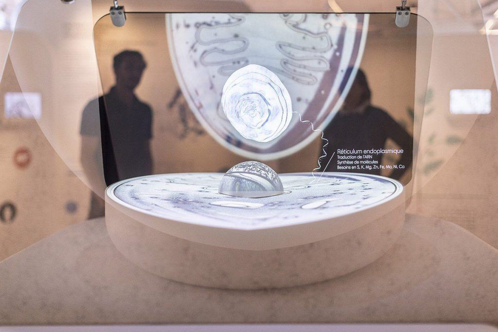 Extrait du parcours de visite : Hologramme de la cellule