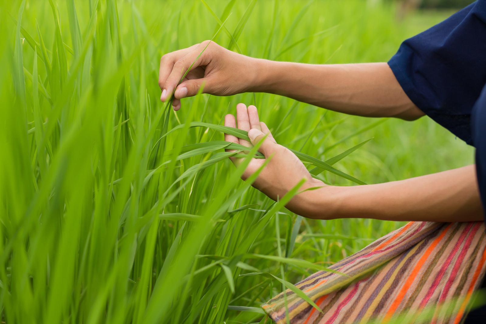 Le Fonds de Dotation Roullier soutient l'agriculture durable