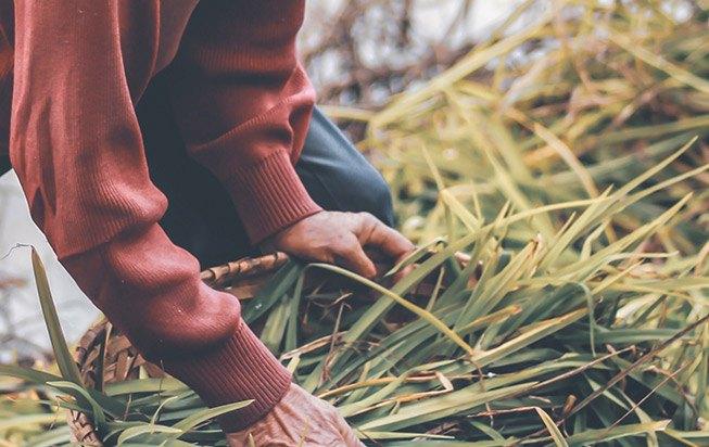 La mission du Fonds de Dotation est de soutenir l'agriculture durable